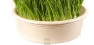 Eschenfelder Weizengrassieb 23 cm weiß