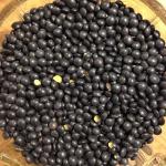 Linsen, schwarz, Beluga 25 kg von DAVERT