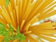 Spaghetti, BIO 5 kg Teilauszug von DAVERT